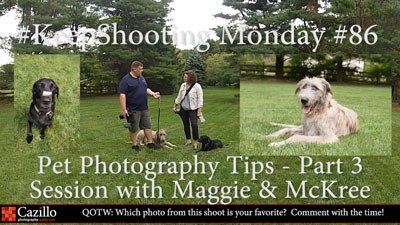 Pet Photography Tips - Part 3