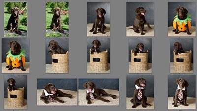 Puppies! Pet Photography Tips - Part 4