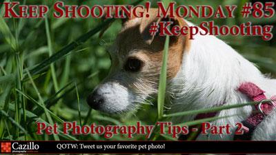 Pet Photography Tips - Part 2
